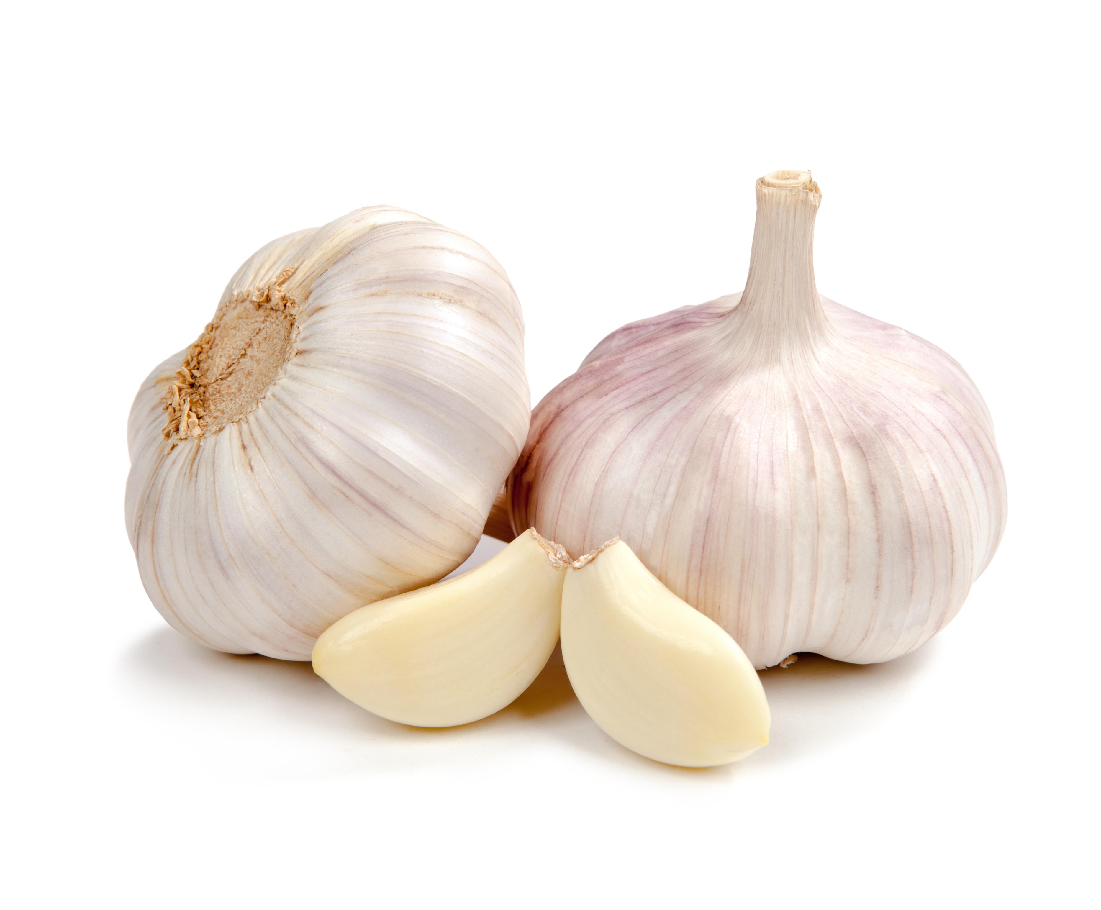 Garlic (bulb) – Allium sativum